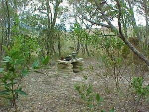Bosque do Contato