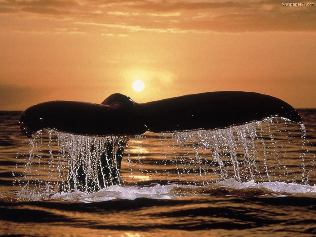 whales-and-whale-watching-13853658580