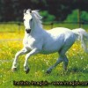 horse w