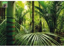 fotomural-green-florest-14