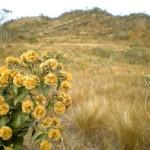 Flor e Montanha
