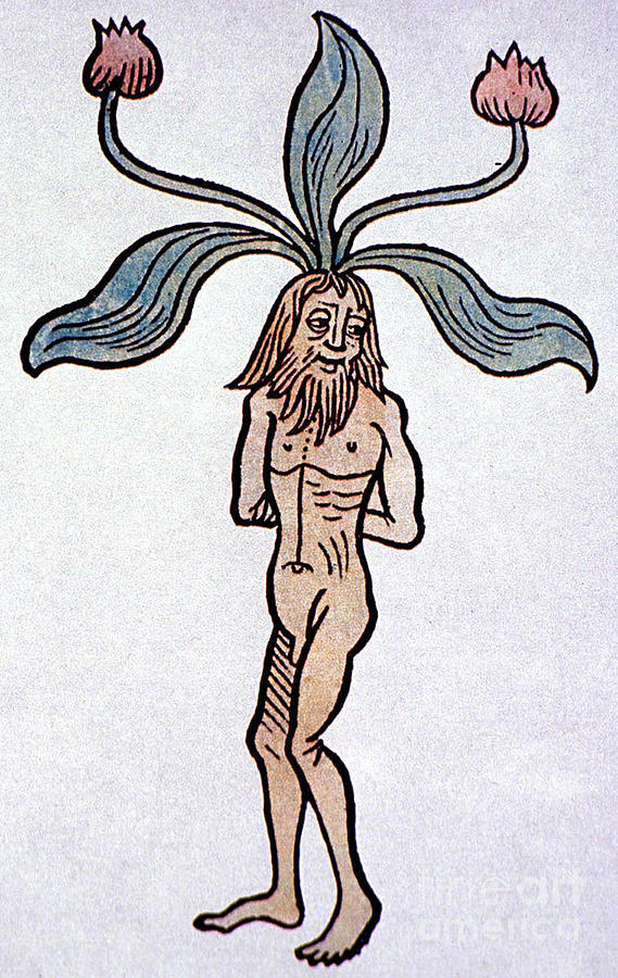 male-mandrake-alchemy-plant-science-source
