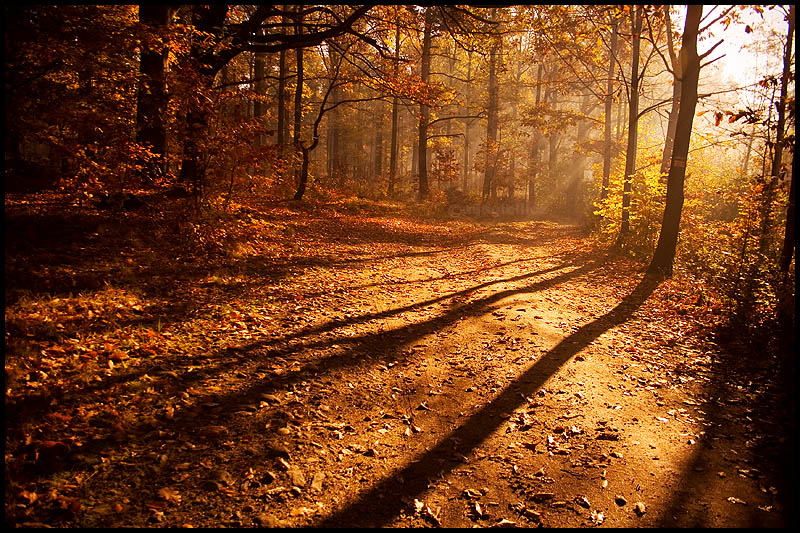 Light_and_shadow_by_mjagiellicz