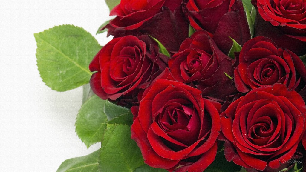 Roses-anniversary-bouquet-flowers-love-red-rose-valentines-day-wedding