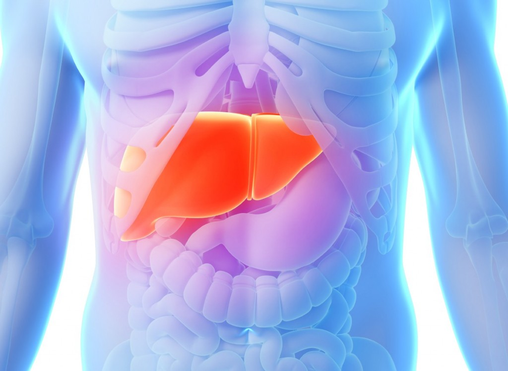 Liver_Body_3D_Anatomy_Hepatitis_C_HCV-e1375110206643