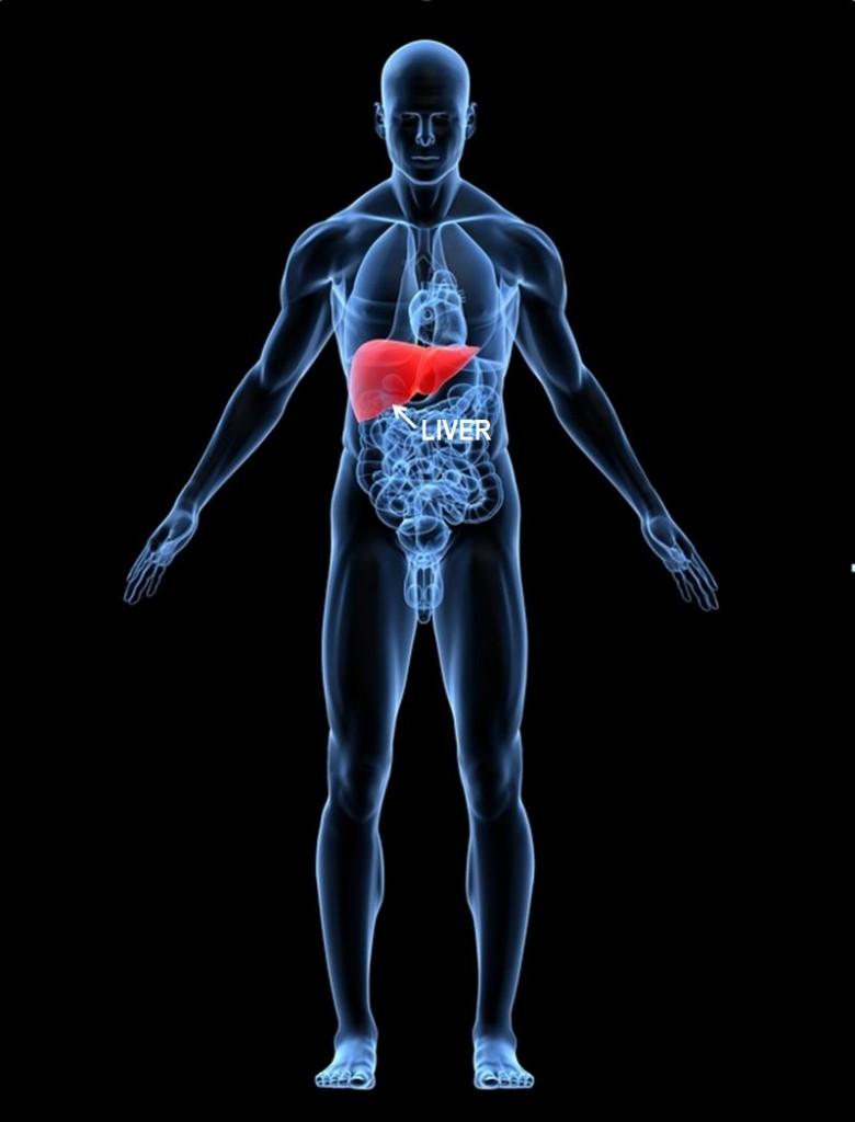 liver-pop up
