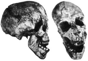 reck_skull1