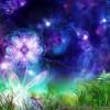 estrela flor