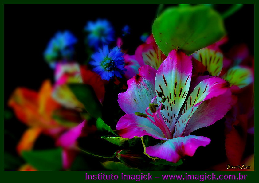 flor sa