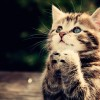 wallpaper-praying-cat