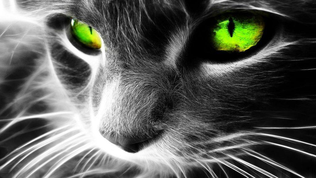 magic-cat-2