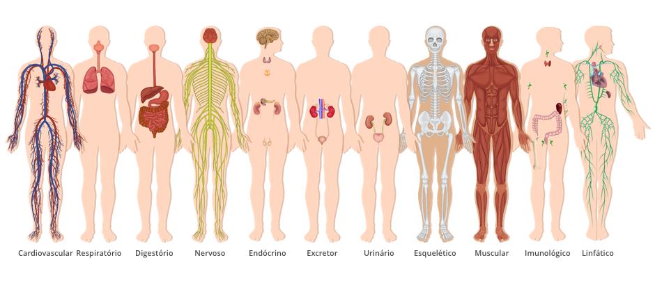sistemas-do-corpo-humano