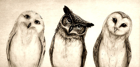 The-Owls-3-by-Isaiah-K-Stephens